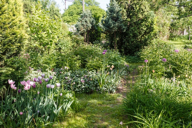 Arbres décoratifs. arbustes et fleurs dans le jardin: épinette, arborvitae, pin, sapin, genévrier.
