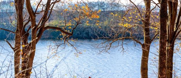 Arbres avec les dernières feuilles d'automne jaunes au bord de la rivière par une journée ensoleillée. paysage d'automne, panorama