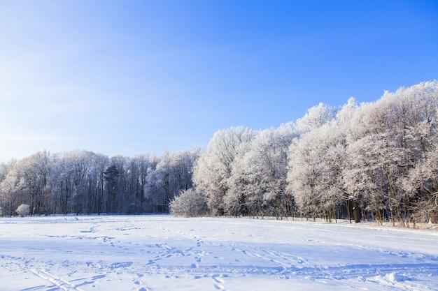 Arbres enneigés blancs dans la forêt d'hiver sur le terrain. beau paysage d'hiver