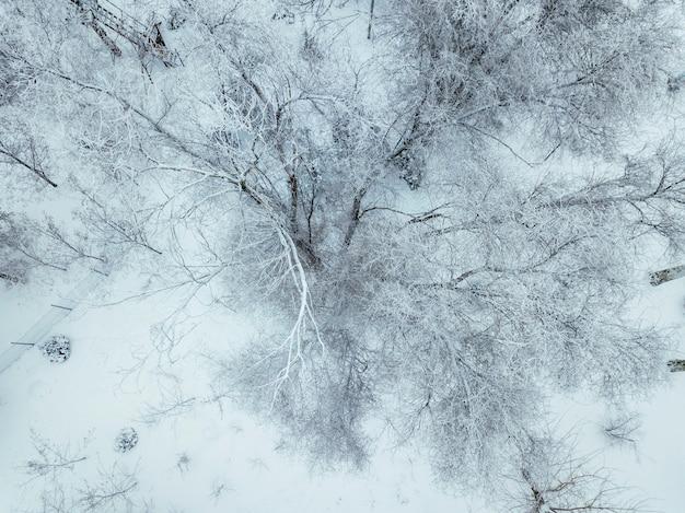 Arbres enneigés en hiver froid vue de dessus b