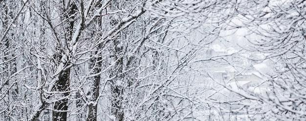 Arbres enneigés moelleux de conte de fées branches nature paysage avec neige blanche