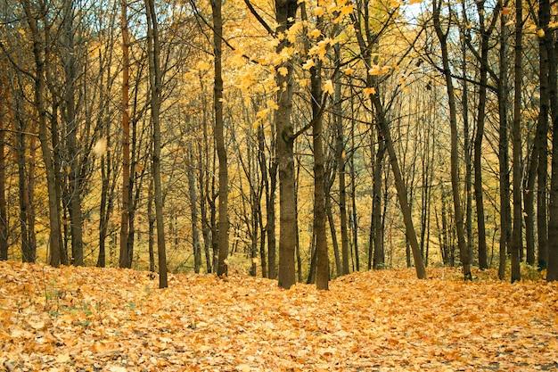 Arbres et environnement de la forêt géorgienne, sauvage.