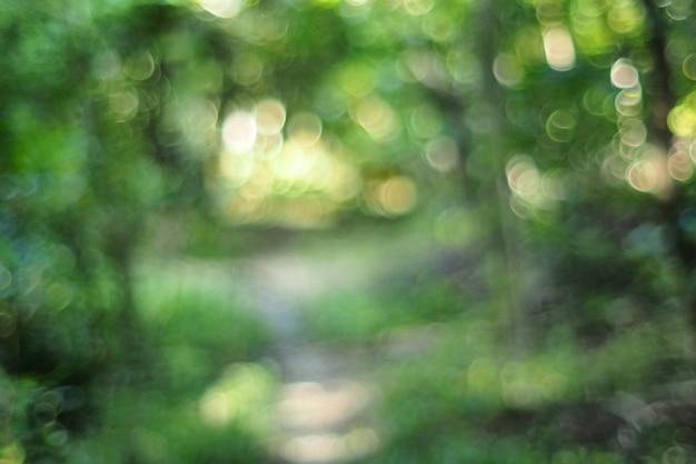 Arbres d'été floues dans le parc