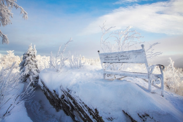 Arbres fabuleux dans la neige matin glacial en forêt