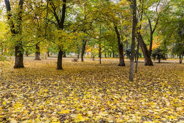 Arbres et feuilles d'automne dans le parc de la ville. paysage d'automne