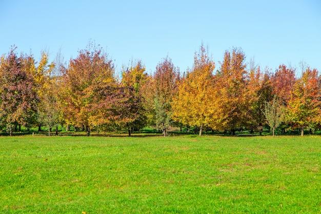 Arbres et feuilles d'automne en journée ensoleillée