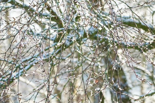 Arbres à feuilles caduques et buissons couverts de neige sans feuilles nues