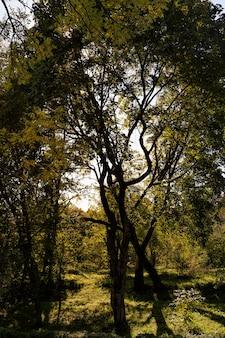 Arbres à feuilles caduques colorés dans la forêt d'automne, le feuillage des arbres change de couleur pendant la chute des feuilles