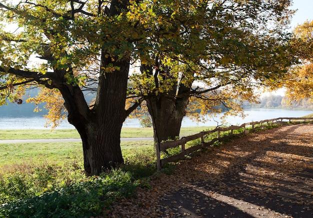 Arbres à feuilles caduques poussant à l'automne de l'année