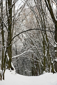 Arbres à feuilles caduques sans feuilles dans la neige après les blizzards et les chutes de neige, phénomènes naturels en hiver avec des plantes et des arbres sans feuilles