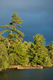 Arbres à feuilles persistantes le long du rivage au lac des bois, en ontario