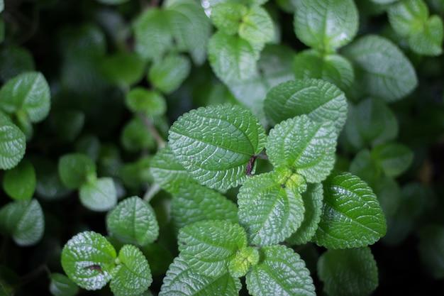 Arbres et feuilles vertes dans le jardin