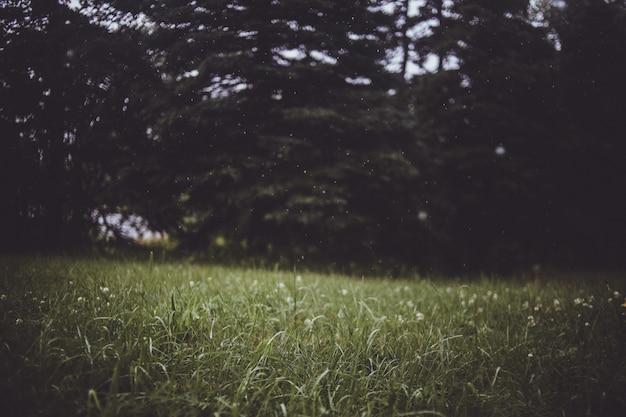 Arbres feuillus verts en bordure de pelouse d'herbe verte