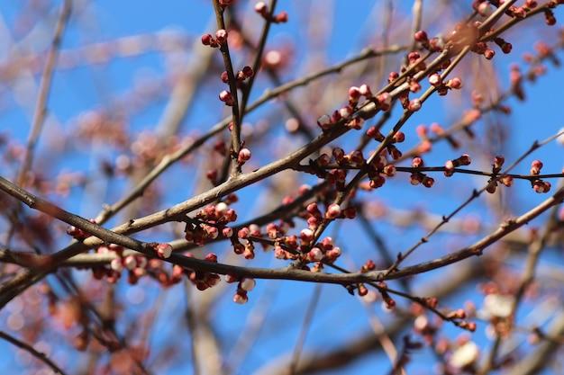 Arbres en fleurs le début de la saison chaude