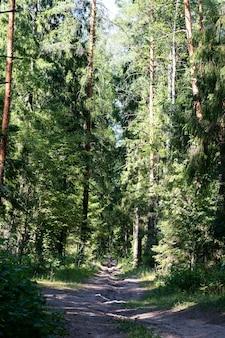 Arbres forestiers. arrière-plans nature bois vert lumière du soleil, été