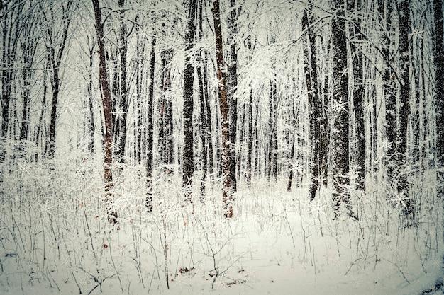 Arbres forestiers d'hiver. arrière-plans de bois de neige nature.