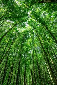 Arbres forestiers. milieux de la lumière du soleil du bois vert nature. ciel