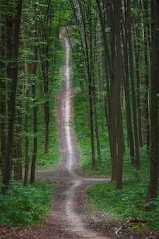 Arbres forestiers. milieux de la lumière du soleil du bois vert nature
