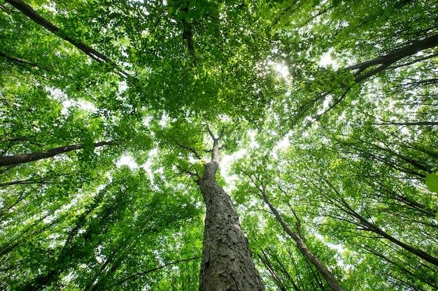 Arbres forestiers. milieux de la lumière du soleil du bois vert
