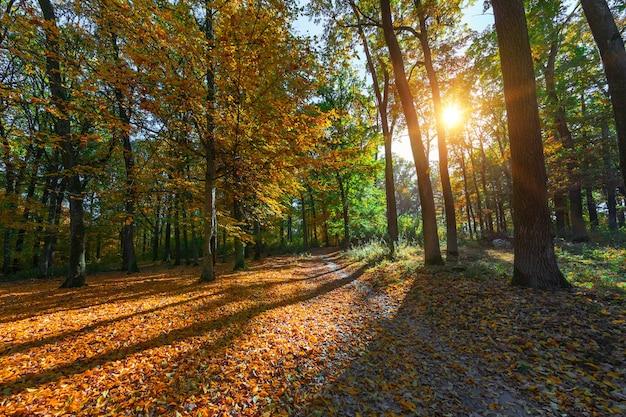 Arbres de la forêt d'automne avec la lumière du soleil