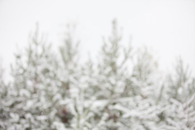 Arbres de la forêt d'hiver de fond sous la neige