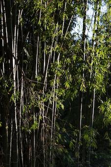 Arbres en forêt, luang prabang, laos