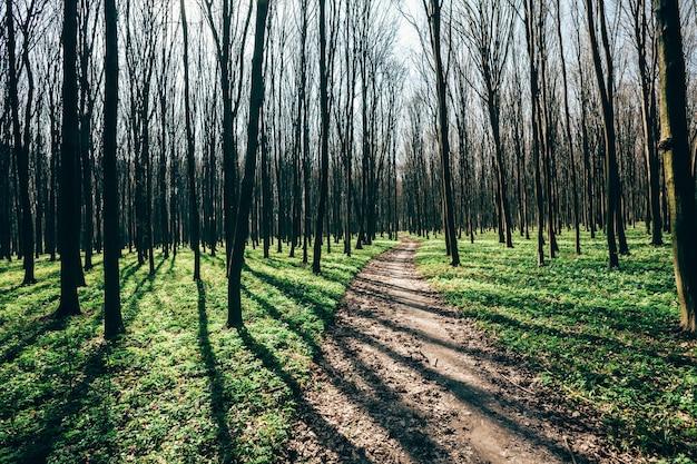 Arbres de la forêt de printemps. arrière-plans de la lumière du soleil du bois vert nature. ciel