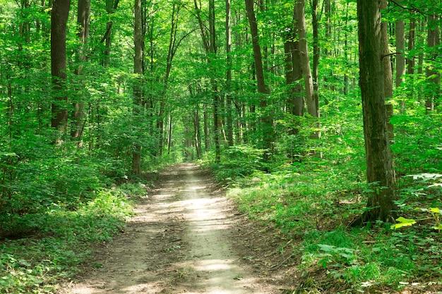 Arbres de la forêt verte nature arrière-plans du soleil bois vert