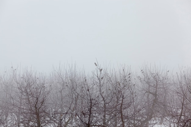 Les arbres fruitiers sont des pommiers en hiver