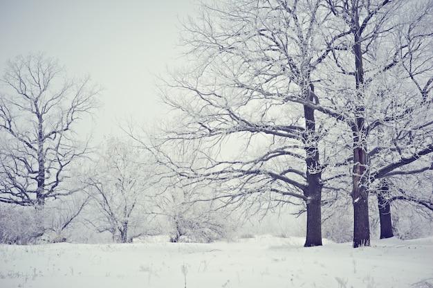 Arbres gelés dans la forêt, branches d'arbre couvertes de givre