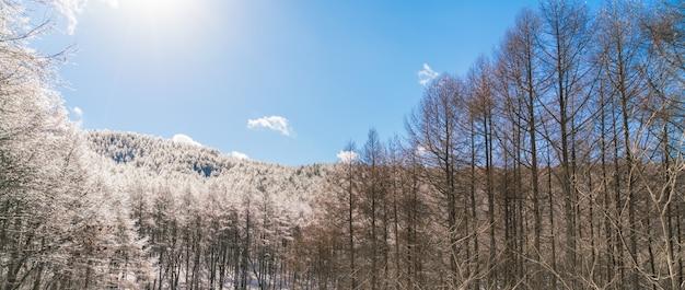 Arbres gelés en hiver avec un ciel bleu