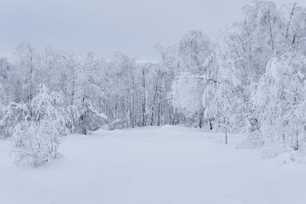 Arbres gelés de paysage naturel d'hiver autour d'une clairière enneigée