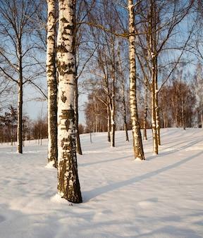 Arbres en hiver - les arbres couverts de neige, poussant en hiver