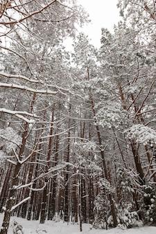 Arbres en hiver couverts de neige