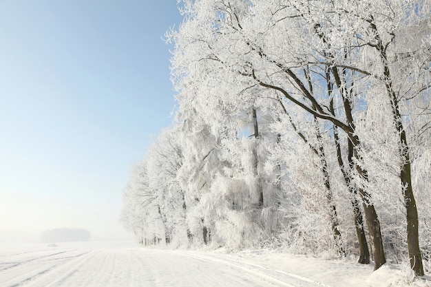 Arbres D'hiver Debout Dans Le Champ à L'aube Photo Premium
