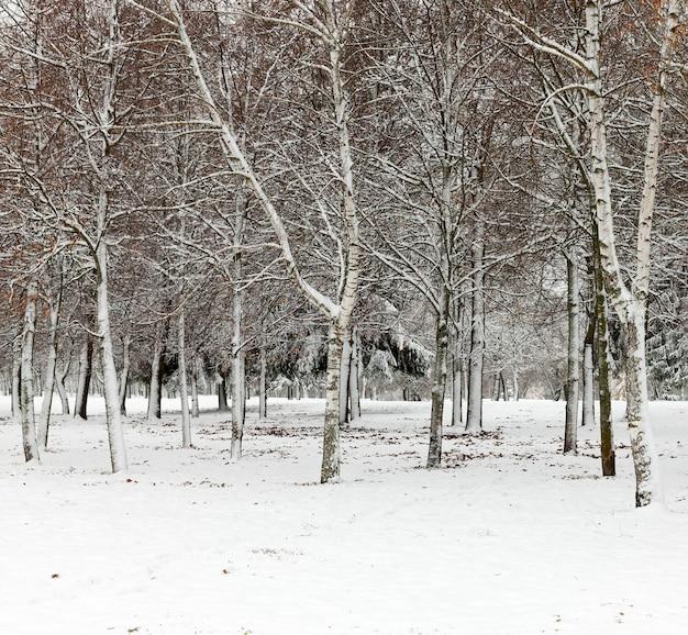 Arbres en hiver, gros plan graphique par temps glacial