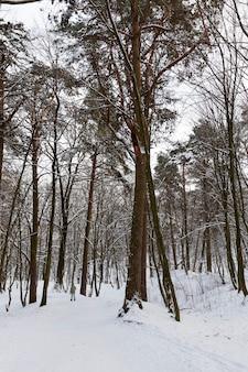 Arbres en hiver