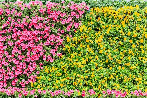 Arbres jardin gazon blanc extérieur vert