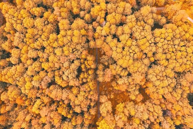 Arbres jaune vif d'automne dans un parc avec sentiers de randonnée, vue aérienne de dessus regardez vers le bas.