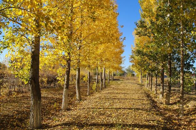 Arbres jaunes et verts dans un parc tranquille. concept de l'automne.