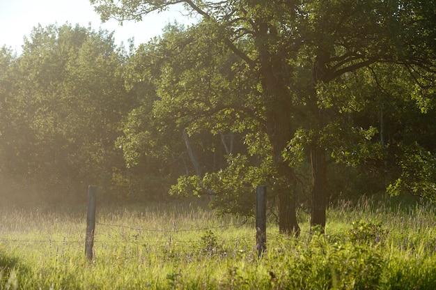 Arbres avec la lumière du soleil à travers la brume au lac des bois, en ontario