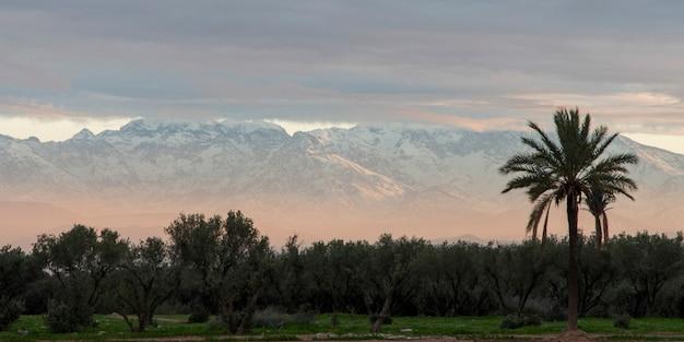 Arbres avec des montagnes enneigées en arrière-plan, montagnes de l'atlas, marrakech, maroc