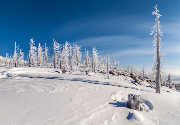 Arbres morts givrés au sommet du mont mustag, russie
