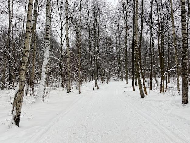 Arbres de neige de la forêt d'hiver. au premier plan, une piste de ski.