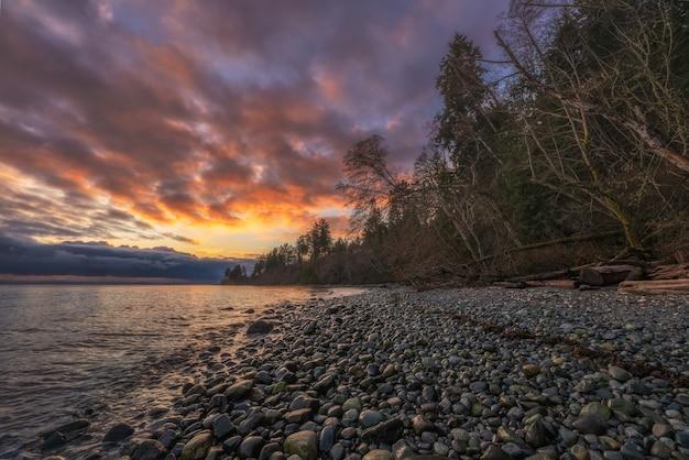 Arbres nus près d'un plan d'eau pendant le coucher du soleil