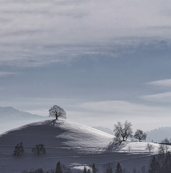 Arbres nus sur un sol couvert de neige sous un ciel nuageux blanc pendant la journée