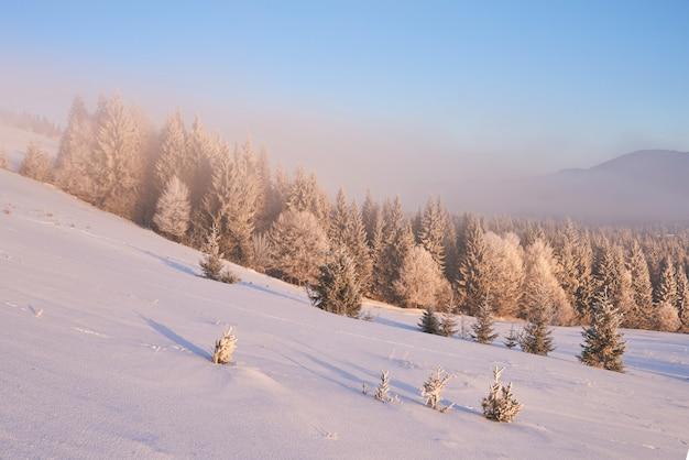 Arbres de paysage d'hiver et clôture en givre, fond avec quelques reflets doux et flocons de neige