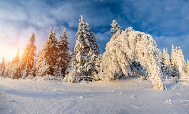 Arbres de paysage d'hiver dans le gel