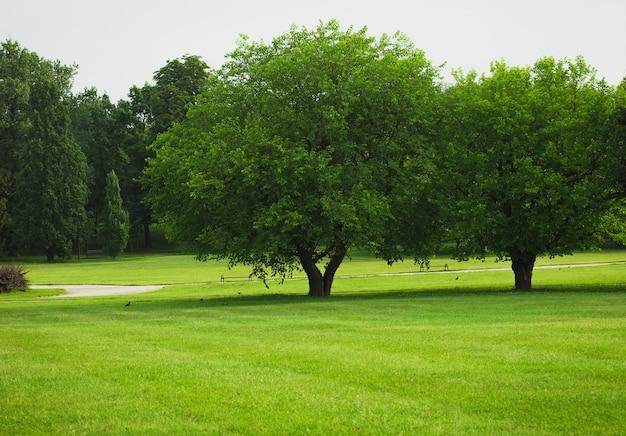 Arbres sur une pelouse verte vide au parc de la ville