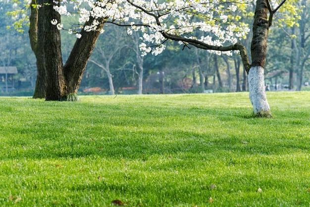Arbres et pelouses